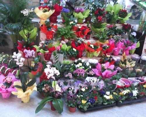 blogulunuiconcitadin.wordpress.com-buchete.de.flori.pentru.toate.gusturile.